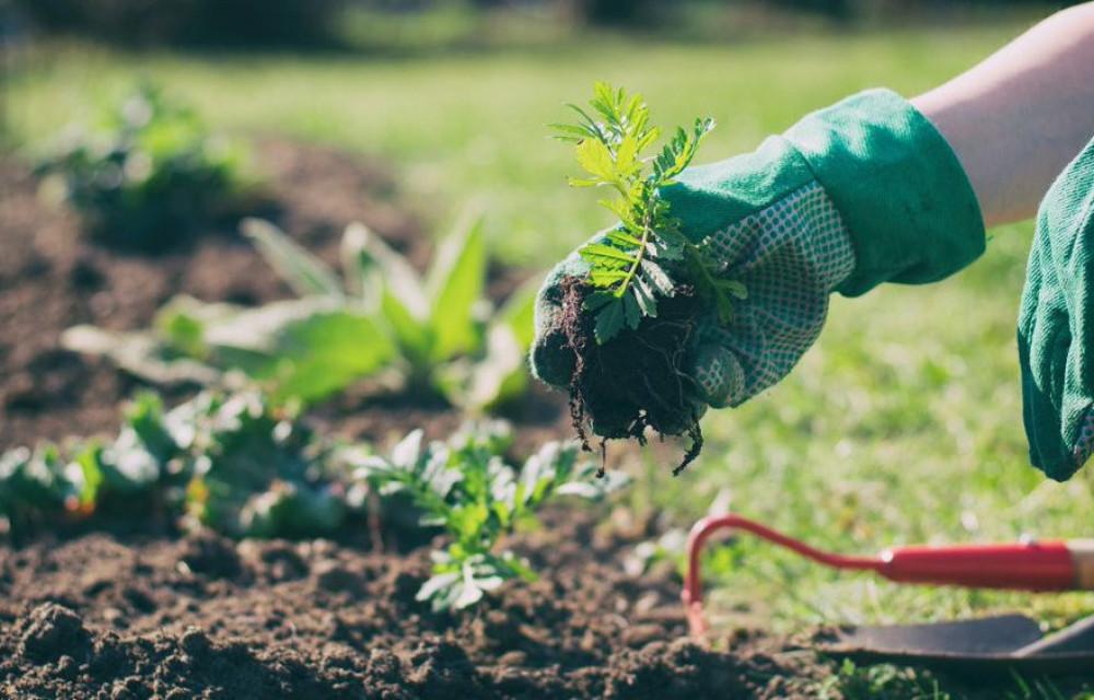 Tuinvrijwilligers gezocht voor 30 april!